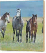 Mom, Dad, And Two Colts Wood Print