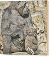 Momma And Baby Gorilla Wood Print