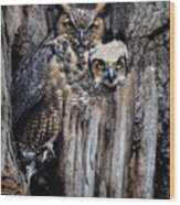 Momma And Baby Owl Wood Print