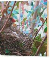 Momma Cardinal Nesting Wood Print