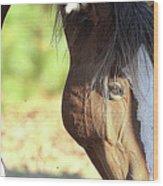Momma Horse  Wood Print