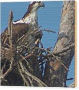 Momma Osprey Wood Print
