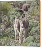 Mommy And Baby Burro Wood Print