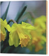 Mom's Daffs Wood Print