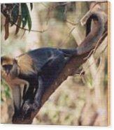 Mona Monkey In A Tree Wood Print