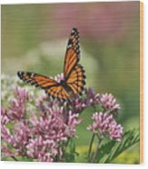 Monarch 1 Wood Print