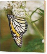 Monarch 2 Wood Print