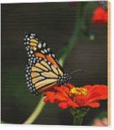 Monarch 6 Wood Print