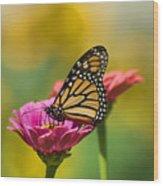 Monarch 9 Wood Print