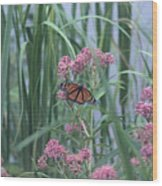 Monarch And Pink Wood Print