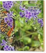 Monarch And Purple Flowers Wood Print