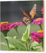 Monarch Approaching Zinnia Wood Print