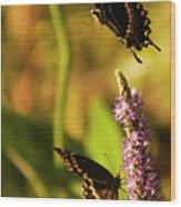 Monarch Butterflies In Spring At Wakulla Springs Wood Print