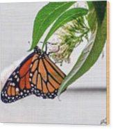 Monarch Butterfly In The Garden 3 Wood Print
