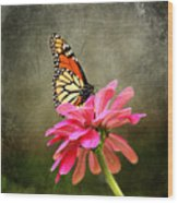 Monarch Butterfly And Pink Zinnia Wood Print