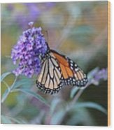 Monarch Butterfly And Purple Flowers Wood Print
