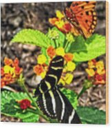 Monarch Butterfly And Zebra Butterfly Wood Print