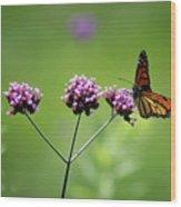 Monarch Butterfly Balanced 2017 Wood Print
