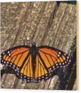 Monarch Butterfly II Wood Print