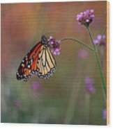 Monarch Butterfly In Autumn 2011 Wood Print