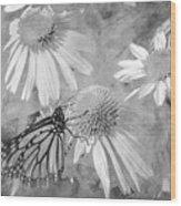 Monarch Butterfly In Black And White Wood Print