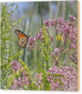 Monarch Butterfly In Joe Pye Weed Wood Print