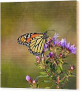 Monarch Butterfly In The Afternoon Sun Wood Print