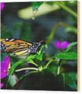 Monarch Buttefly Wood Print