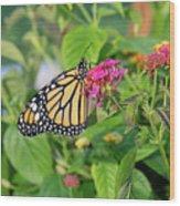 Monarch Butterfly On A Flower  Wood Print