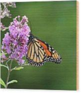 Monarch Butterfly On Butterfly Bush 2011 Wood Print