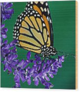 Monarch Butterfly On Flower Blossom Wood Print