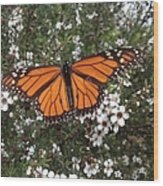 Monarch Butterfly On New Zealand Teatree Bush Wood Print