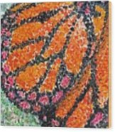 Monarch Butterfly On Ocotillo Blossom Wood Print