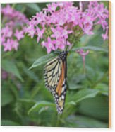 Monarch Butterfly On Pink Flowers  Wood Print