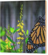Monarch Butterfly Poised On Green Stem Among Yellow Flowers Wood Print