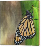 Monarch Butterfly Poised On Green Stem Wood Print