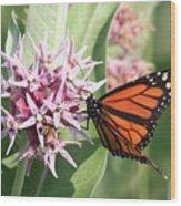 Monarch Butterfly Showy Milkweed Bloom Wood Print