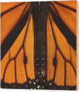 Monarch Butterfly Wings Wood Print