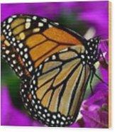 Monarch Dreams Wood Print