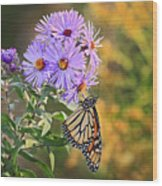 Monarch Feeding Wood Print