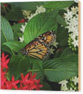 Monarch Framed Wood Print