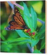 Monarch Heaven Wood Print