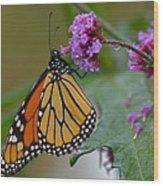 Monarch In The Rain Wood Print