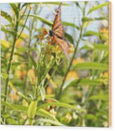 Monarch Is Indeed King Of The Butterflies Wood Print by Dustie Meads