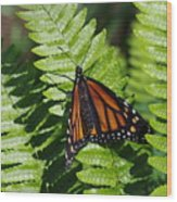 Monarch On A Fern Wood Print