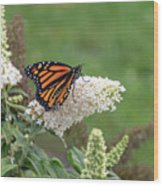 Monarch On A Butterfly Bush Wood Print