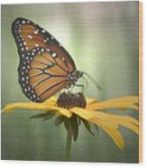 Monarch On A Black Eyed Susan Wood Print