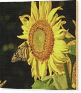 Monarch On A Sunflower Wood Print