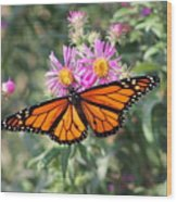 Monarch On Blanket Flower Wood Print