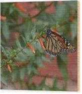 Monarch On Cigar Plant Wood Print